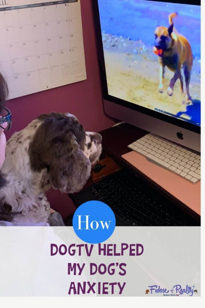 dog anxiety with dog tv