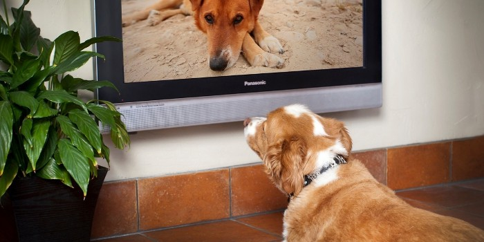 How Watching DOGTV Calmed My Dog's Anxiety