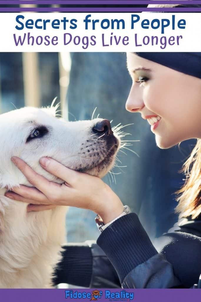 help dog live longer life