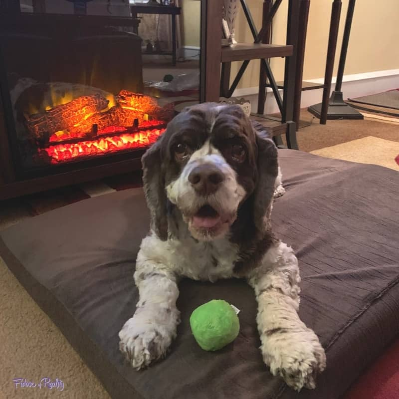 dog on barkbed