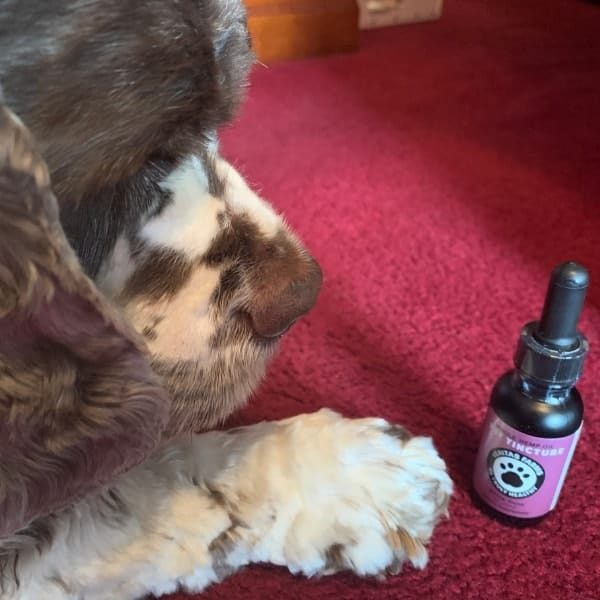 Why I Started Giving My Dog CBD Whole Hemp Oil - Fidose of