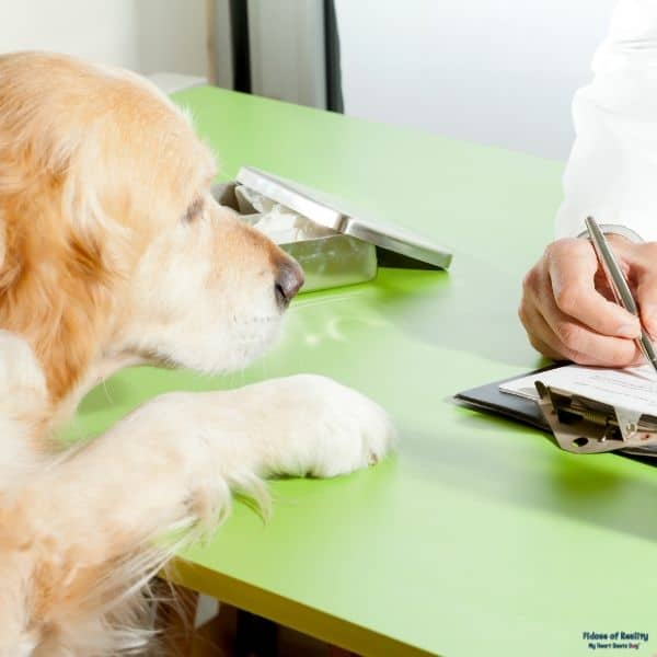 dog prescription at vet