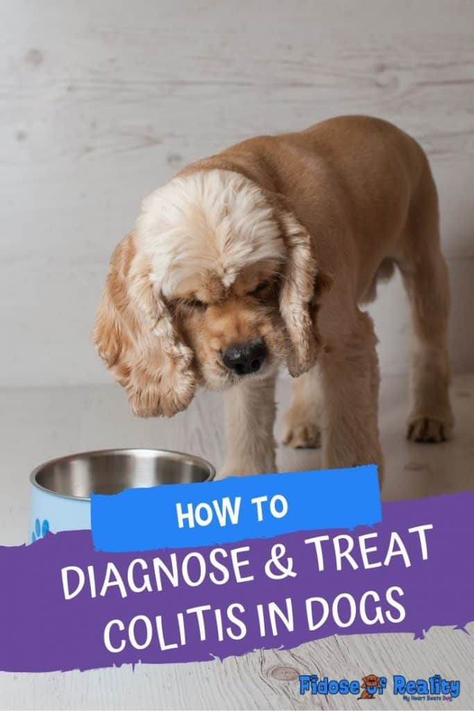 how to help a dog with colitis