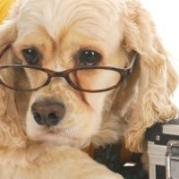 saving money on dog prescriptions