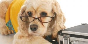 saving money on dog prescriptions