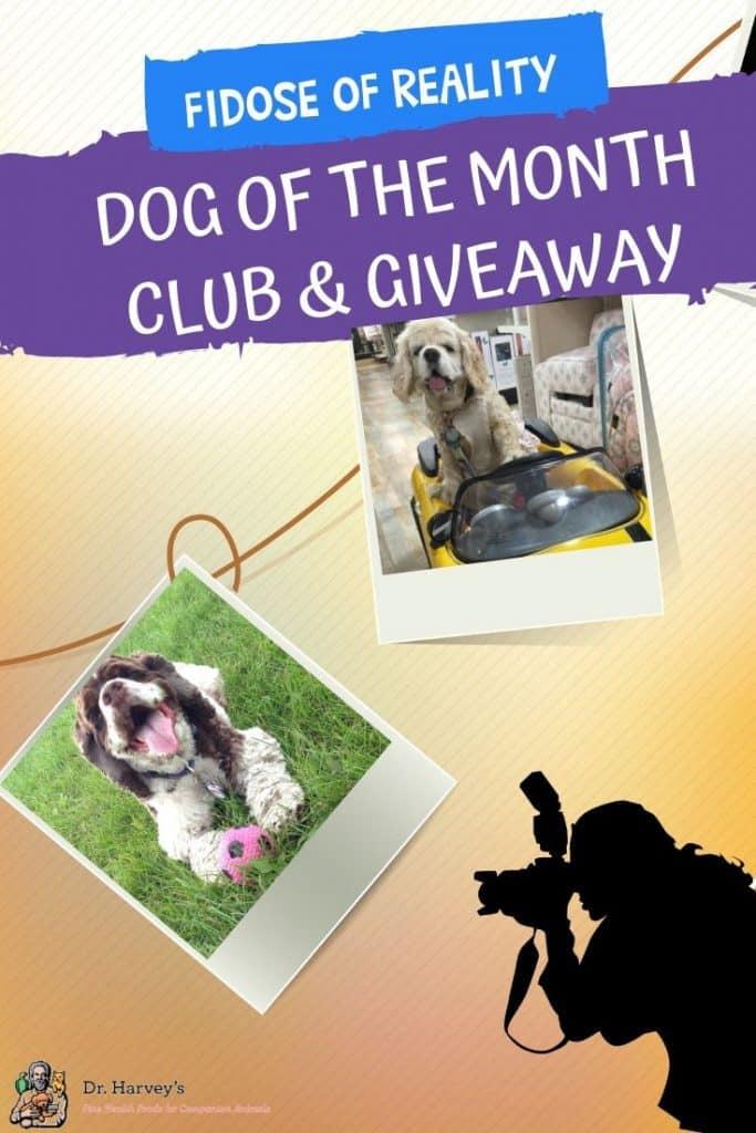 dog photo contest