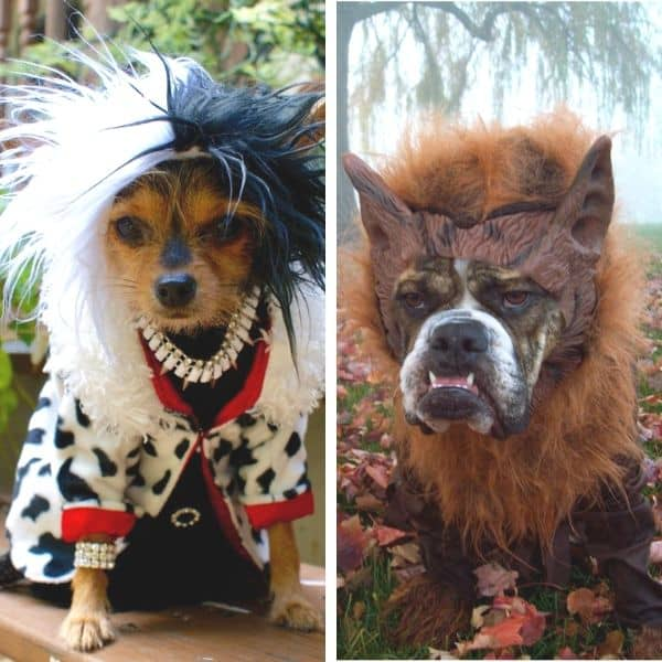 dog photo contest halloween winners