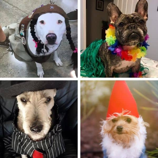 dogs pose for camera during photo competition