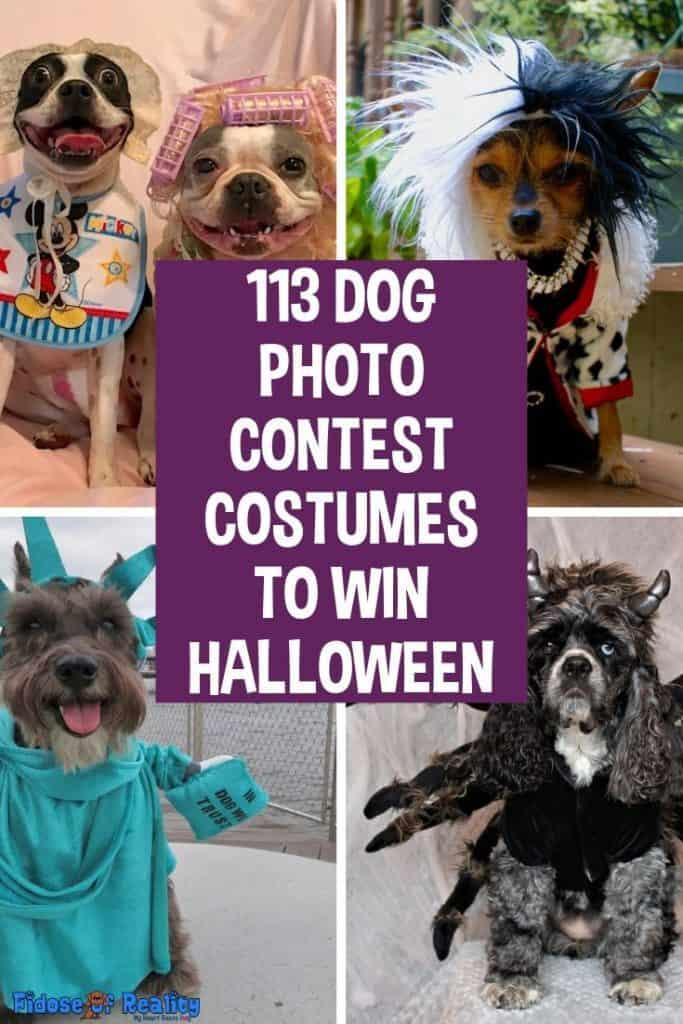 dog photo contest ideas for halloween