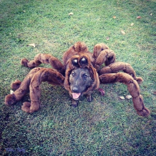 spider dog poses for camera