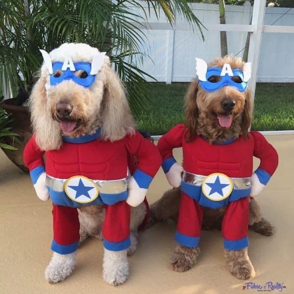 superhero dogs ready for Halloween