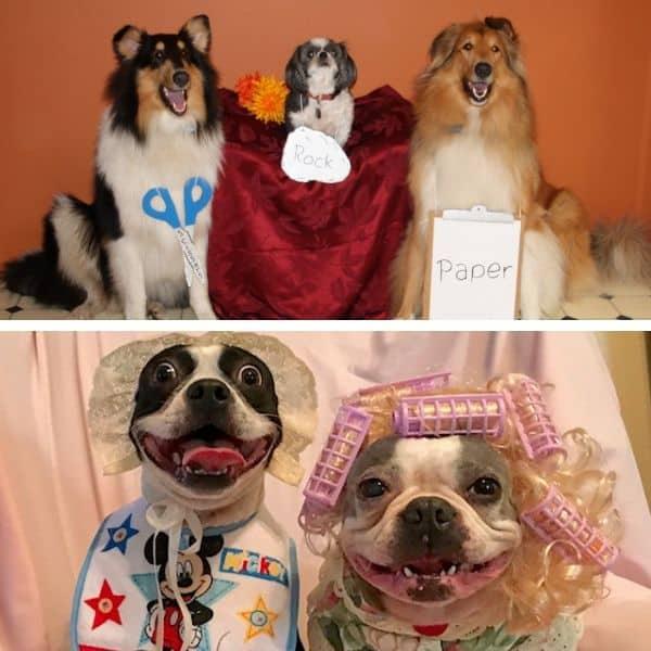 dog photo contest entries