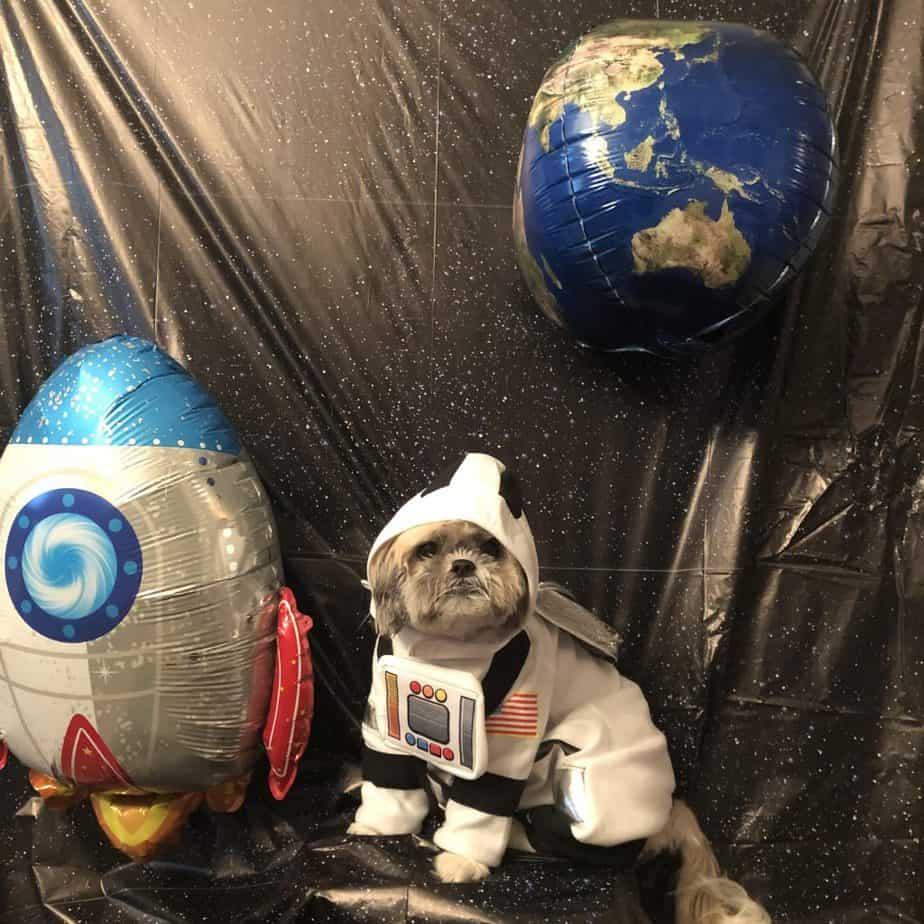 astronaut dog for halloween
