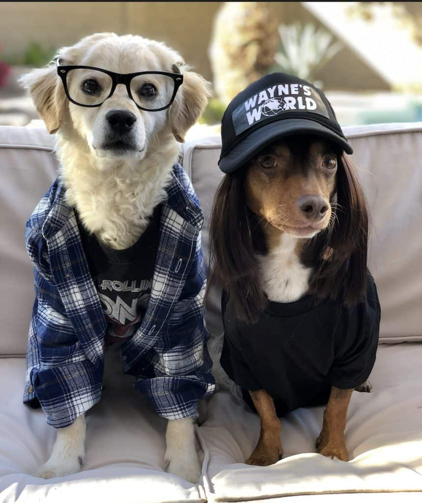 Wayne's World dogs