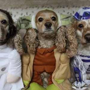 Cocker spaniels dressed up for halloween