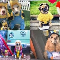 dog halloween photo contest winners