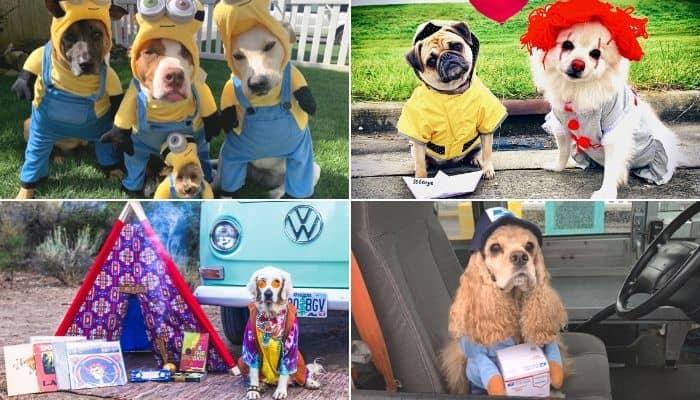 Dog Halloween Photo Contest Winners 2019