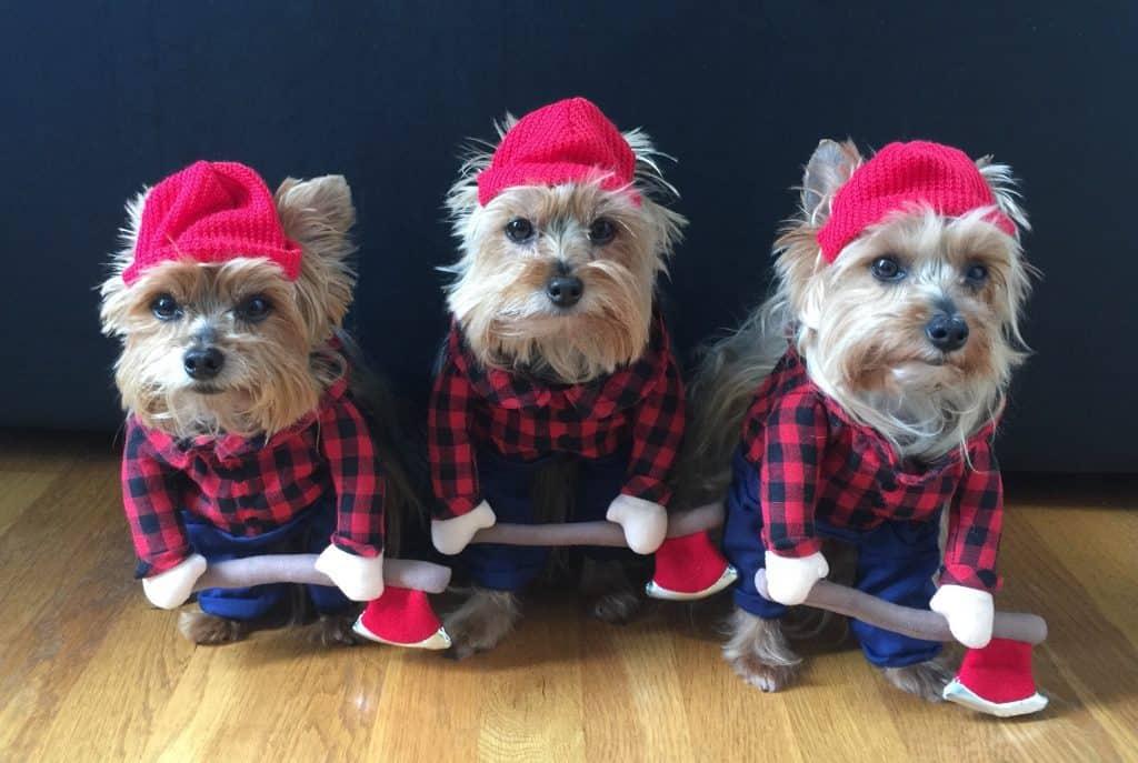 lumberjacks halloween