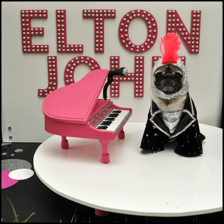 pug dressed as Elton John