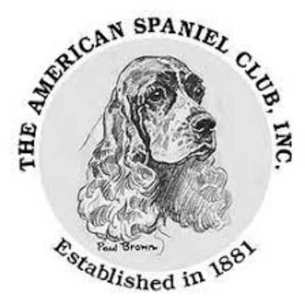 American Spaniel Club
