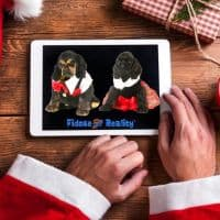 Dog holiday photo contest