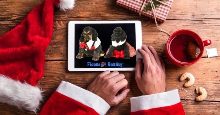 Dex The Halls 2019 Dog Holiday Photo Contest