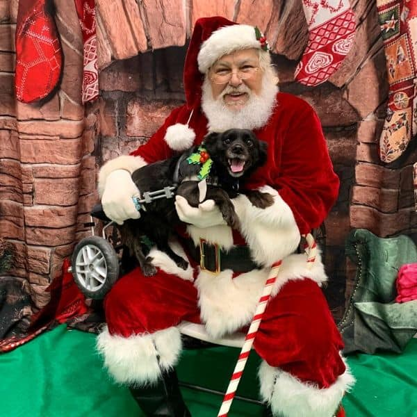 dog with santa claus