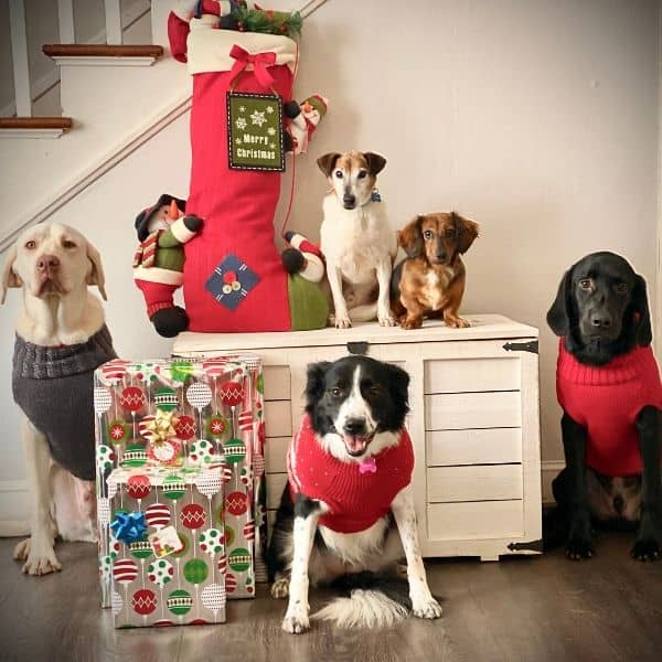 Christmas contest winner dogs
