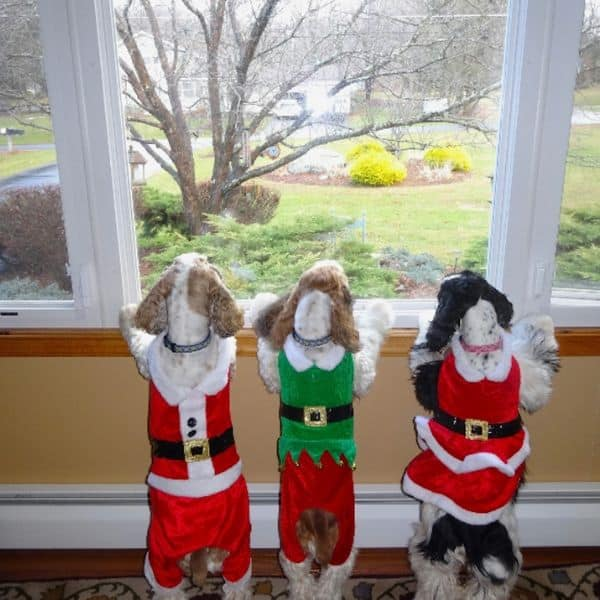cocker spaniels ready for Santa