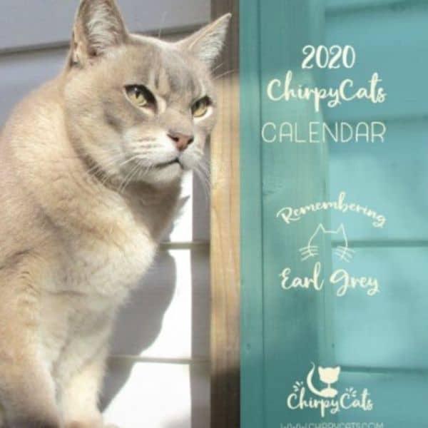 cat calendar gift