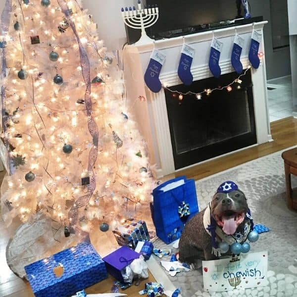 Cute dog celebrating Hanukkah