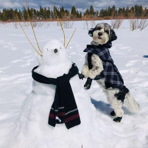 Dog with snowman contest winner