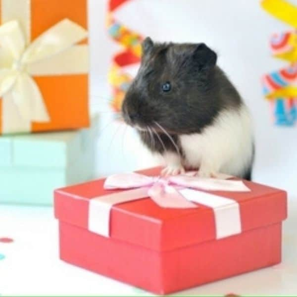 pet lovers rat gifts