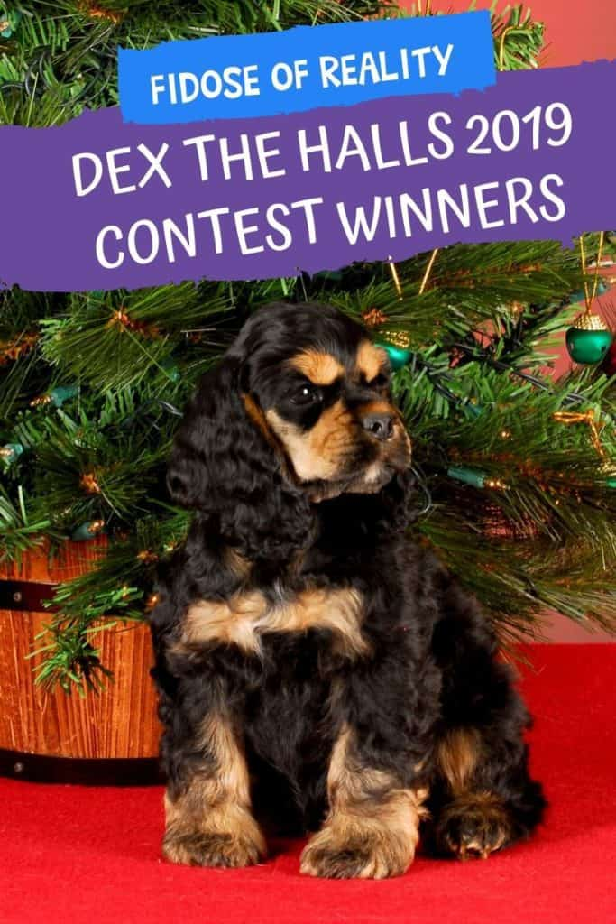 Dog holiday photo contest winner