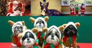 Dog Holiday Photo Contest Winners