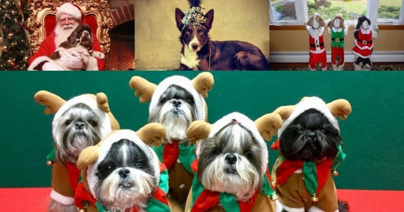 Dog Holiday Photo Contest Winners