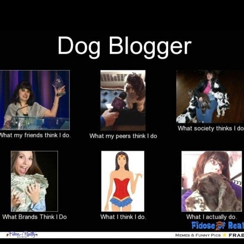 The journey of a pet blogger