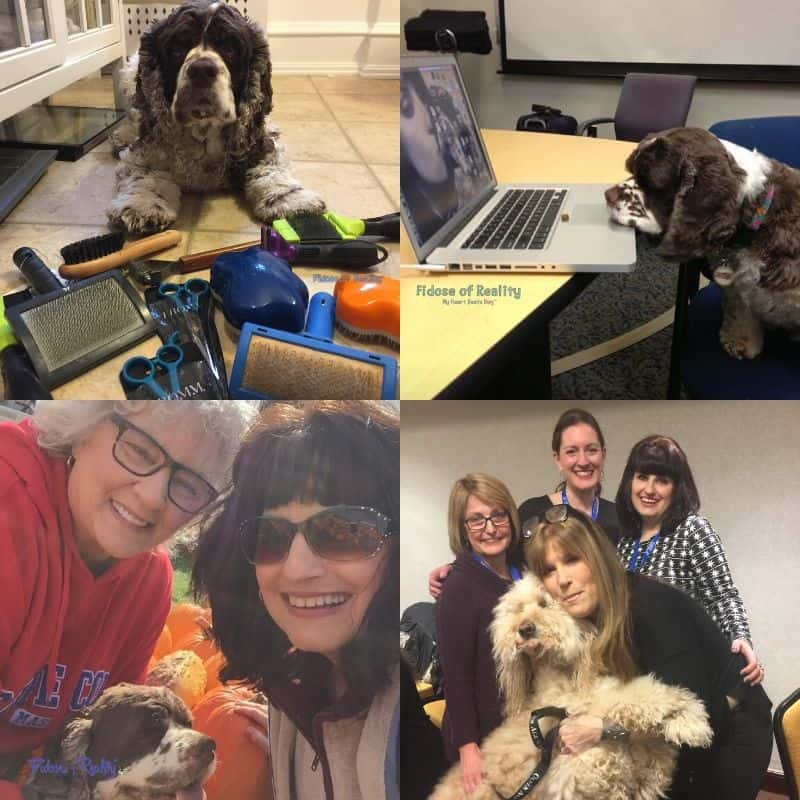 journey of pet blogging through the years