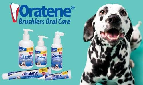 brushless teeth dog system