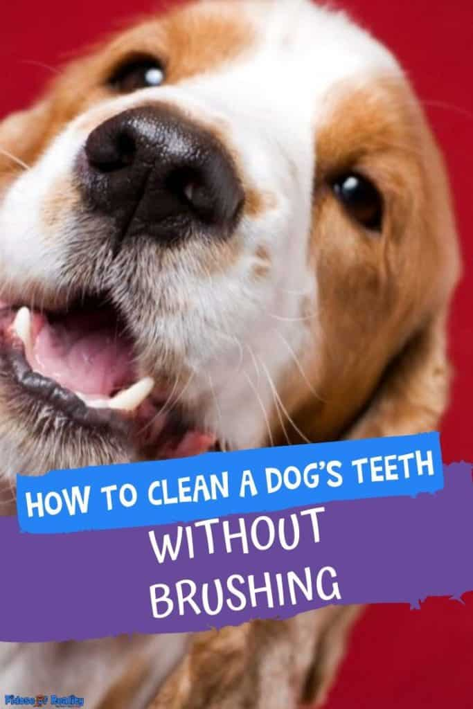 clean dog teeth with no brush