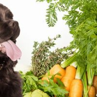 Dog who eats his vegetables