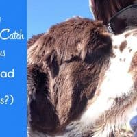 facts about Cocker Spaniels coronavirus