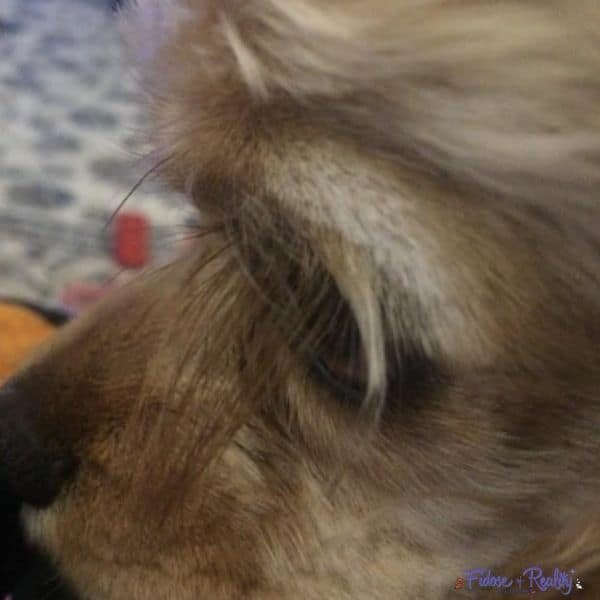 dog with long eyelashes