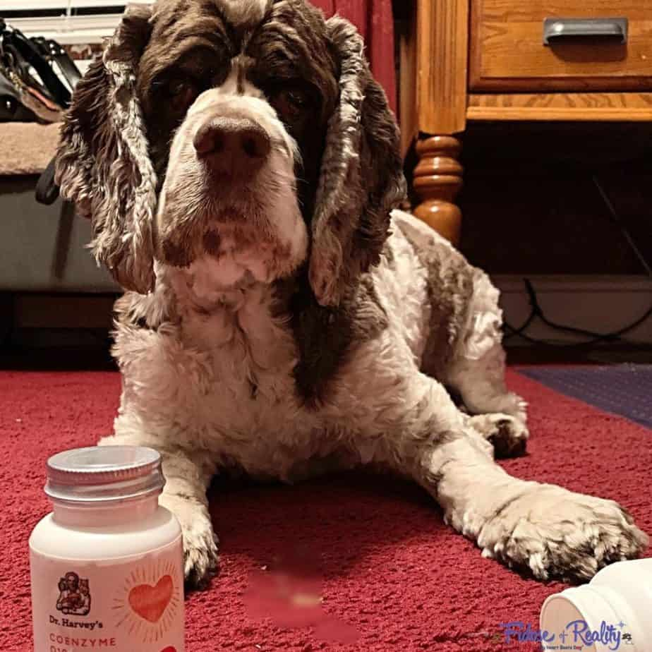 CoQ10 For Dogs with heart issues