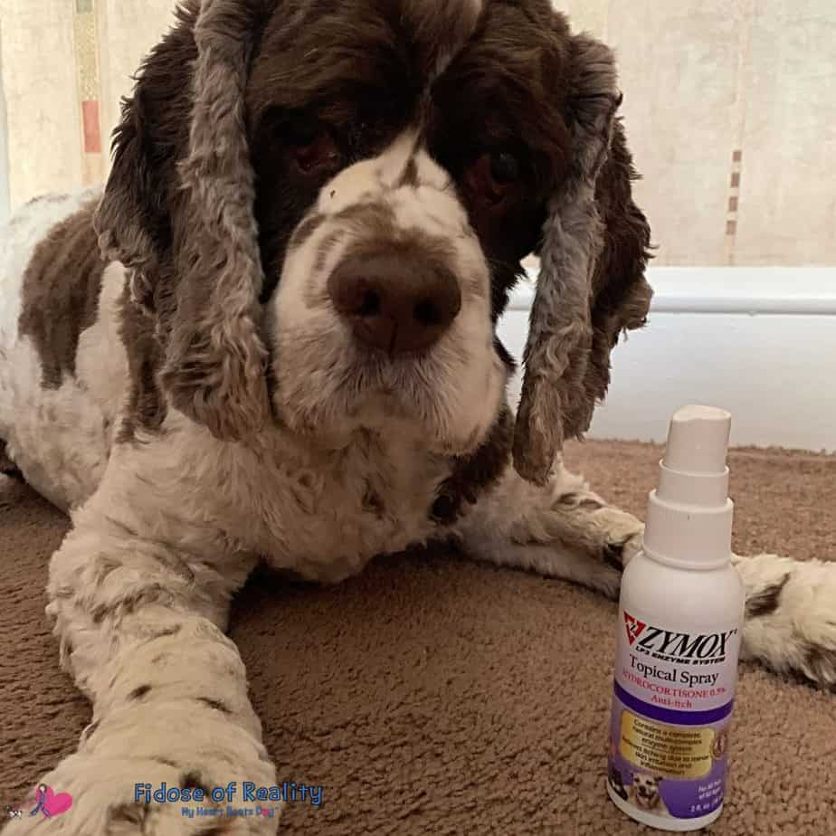 cocker spaniel emergency medicine