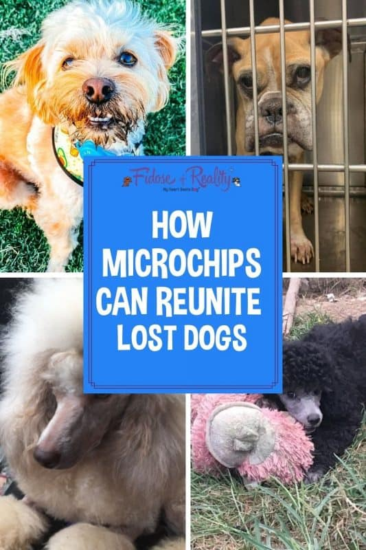 Can microchipping reunite lost dogs
