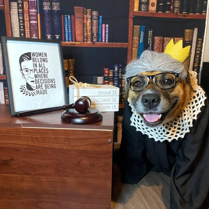 Ruth Bader Ginsburg Halloween dog