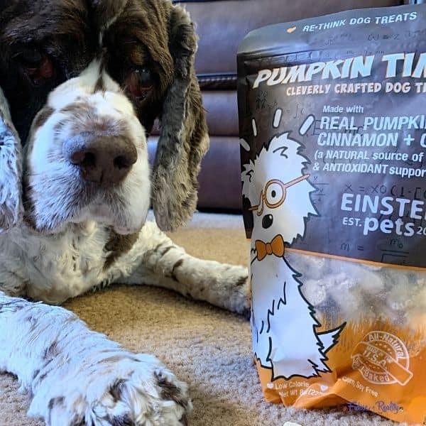 dog pumpkin treats