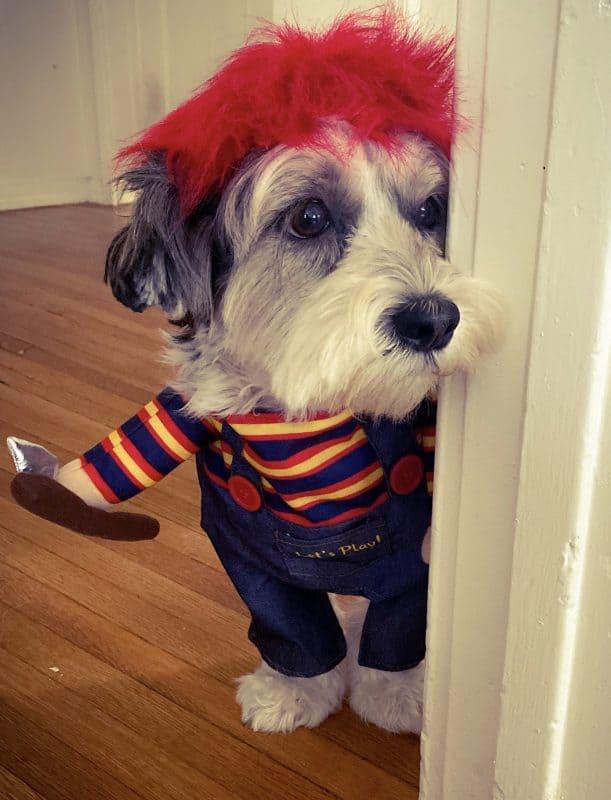 Halloween Chucky doll for contest