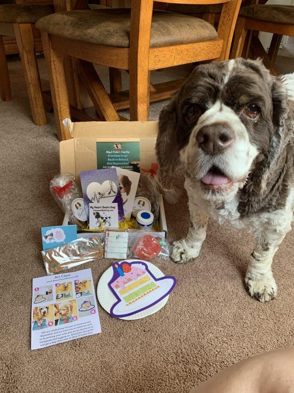 Dog Halloween photo contest prize box